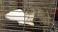 Cats before slaughter 03.JPG