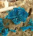 Cavansite-Stilbite-Ca-165808.jpg