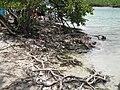 Cayos de Caña Gorda-6 (mangrove shore).jpg