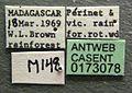 Cerapachys mayri casent0173078 label 1.jpg