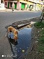 Chandannagar GT Road.jpg