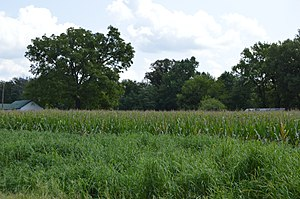 Chantilly (Montross, Virginia) - Fields on the western end of the estate property