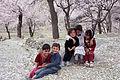 Children of Paradise- Blossom in Karimabad Hunza.jpg