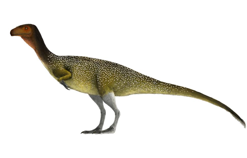 Chilesasaurus