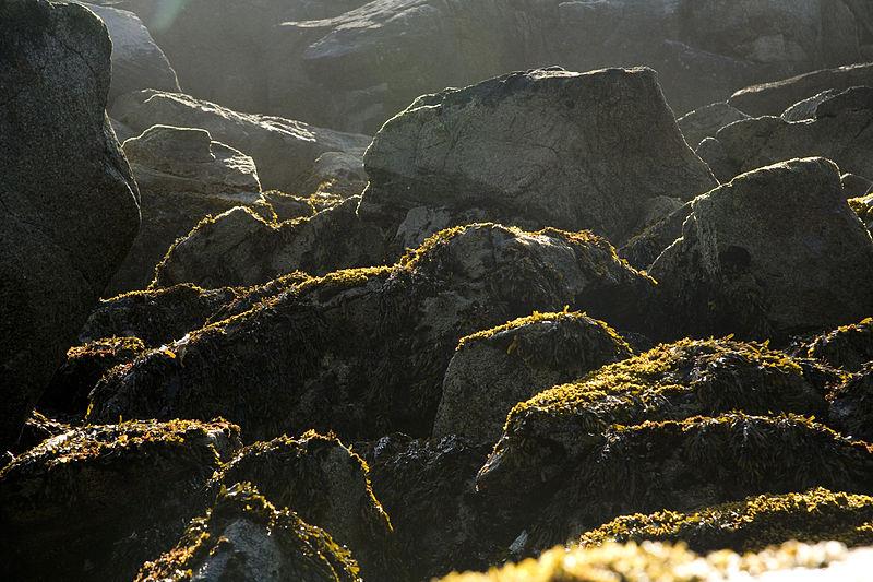 Chowiet Island beach kelp.jpg