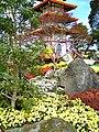 Chrysanthemum-pagoda.jpg