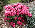 City of London Cemetery - flowering shrubs 14.jpg