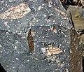 Clast-rich impact pseudotachylite (Sudbury Breccia, Paleoproterozoic, 1.85 Ga; Windy Lake Northwest roadcut, Sudbury Impact Structure, Ontario, Canada) 32 (40773196233).jpg
