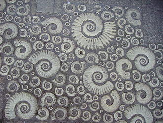 Lyme Regis Museum - Coade stone fossil ammonites in the pavement outside the museum.
