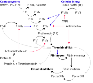 Coagulation cascade