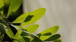 Drug policy - coca plant