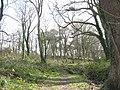 Coed yr Hendy - geograph.org.uk - 375033.jpg