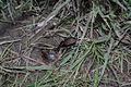 Coleoptera 001.JPG