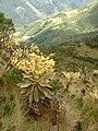 Colombia Iguaque 1.JPG