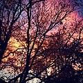 Colorado sky at sunset through tree foliage.jpg