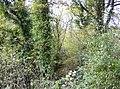 Copse near Hay Place - geograph.org.uk - 623400.jpg
