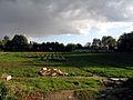Cormeilles-en-Parisis 5 field.jpg