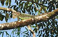 Costa Rica 96.DSCN4099-new (31129635455).jpg