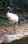 Crane japan2