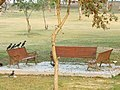 Crows on Park Bench.jpg