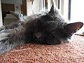 Cumbria cat (27330140203).jpg