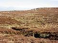 Curricks on Knockshield Moor - geograph.org.uk - 392374.jpg