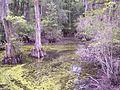 Cypress Swamps (6070660458).jpg