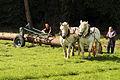 Débardage JEAN BAPTISTE RICARD mondial du cheval percheron 2011Cl J Weber11 (23787823330).jpg