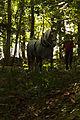 Débardage mondial du cheval percheron 2011Cl J Weber02 (24083491975).jpg
