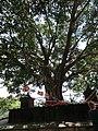 Dambulla, Sri Lanka - panoramio (69).jpg