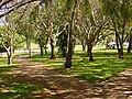 Darwin, Esplanade - panoramio.jpg