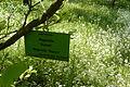 Dendrologic Garden, Poznan, spring (11).JPG