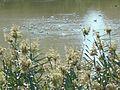 Desembocadura del Segura En las Dunas de Guardamar.jpg