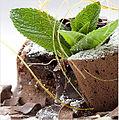 Devil Tort Mint Cake © RGI.jpg