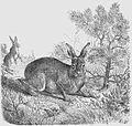Die Gartenlaube (1859) b 697.jpg