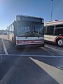 Disney Bus Number 4919-04 (32825177306).jpg