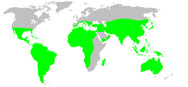 Distribution.filistatidae.1.png