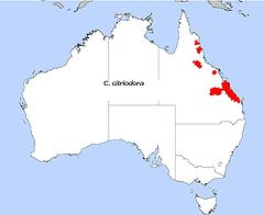 Distribution Corymbia citriodora.jpg
