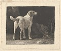 Dog (A Foxhound Viewed from Behind) MET DP835554.jpg