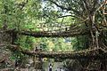 Double decker living root bridge 01.jpg