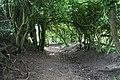 Double hedge - geograph.org.uk - 815697.jpg