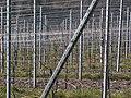 Drahtrahmenerziehung Weinbau.jpg