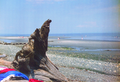 Driftwood - French Beach, Vancouver Island, Canada.png
