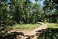 Drum prin padure in ocolul silvic Călinești.jpg
