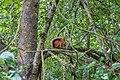 Dubrava Ščomyslickaja natural monument (Belarus) p04 — squirrel.jpg