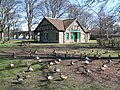 Duck Soup - geograph.org.uk - 1222495.jpg