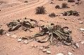 Dunst Namibia Oct 2002 slide317 - bis 2000 Jahre.jpg