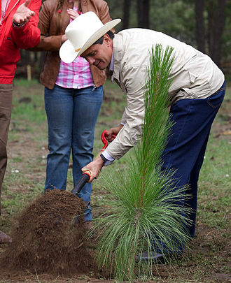 President Enrique Pena Nieto plants a tree in Balleza, Chihuahua to commemorate the Dia del Arbol 2013. EPN. Dia del Arbol.jpg