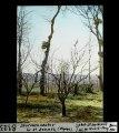 ETH-BIB-Storchennester -bei- St. Donath (Algérie)-Dia 247-08123.tif