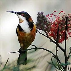 8. Птицы Австралии. птицы австралии. фото птиц. в цитатник. поставить...